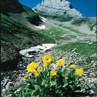 In der Bergwelt