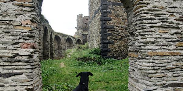 Ruine Wernerseck
