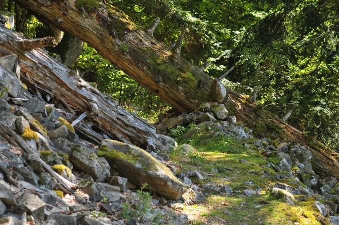 Im Bannwald Schwarzahalde