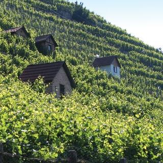Weinwanderweg Bad Cannstatt - Weinberghütten