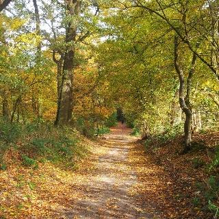Wanderweg im Wurmtal