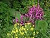 Manche Kräuter blühen sehr schön...  - @ Autor: Heinz Obinger  - © Quelle: GPSconcept