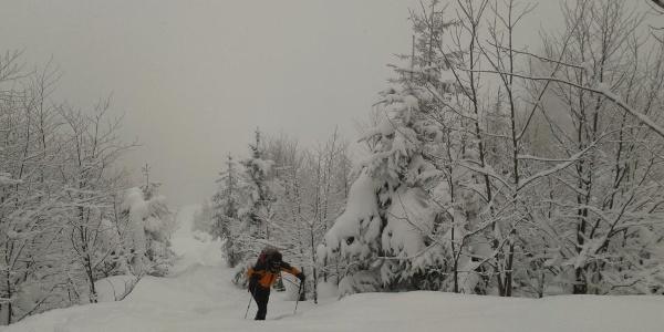 Kurz oberhalb des freien Geländes der Laimeralm (20.2.2013)