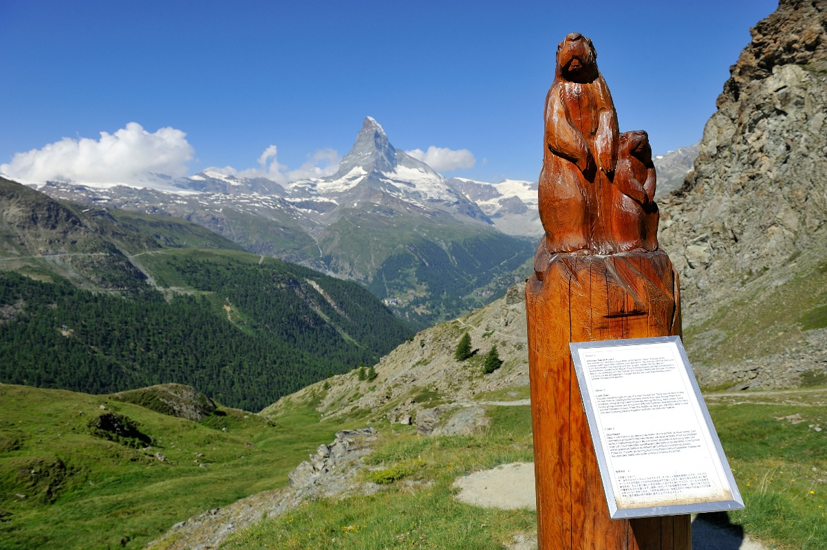 Wooden marmot sculpture with info panel
