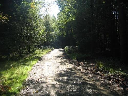 Walderlebnispfad Wildschweinweg in Neuenrade