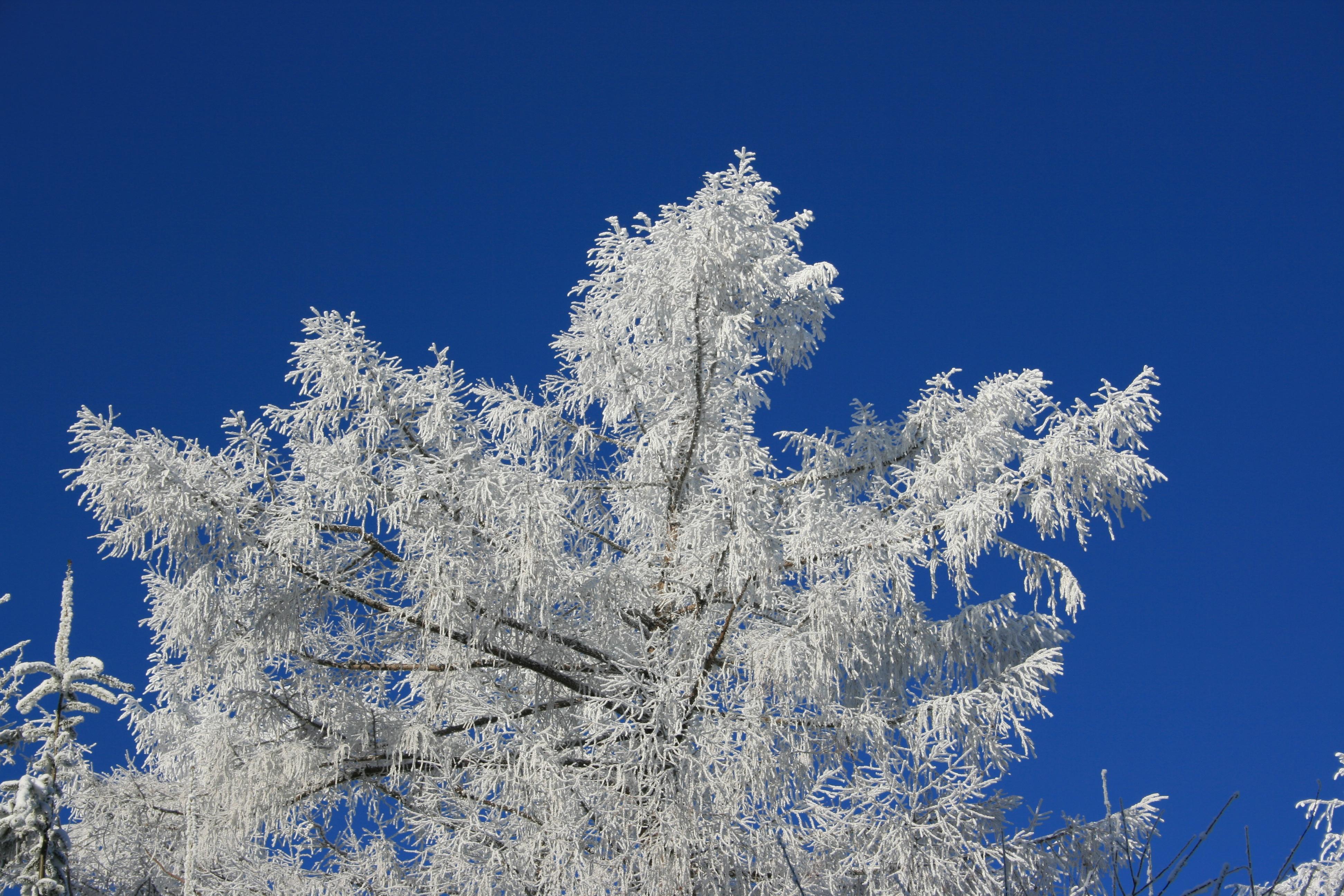 Winterlandschaft in der Ferienregion Brandenkopf