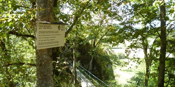 Brücke Aussichtspunkt Hertenstein