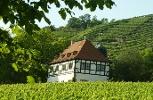Foto Weingut Hoflößnitz