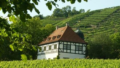 Weingut Hoflößnitz