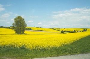 Foto Landschaftsidylle im Frühling