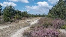Rundweg Königsbrücker Heide - Wo Wildnis entsteht