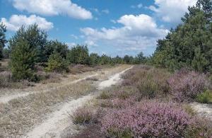 Foto Heideweg am Flugfeld Zochauer Heide