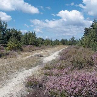 Heideweg am Flugfeld Zochauer Heide
