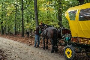 Foto Pferdekutsche