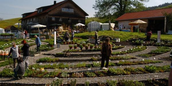 Artemisia Allgäuer Kräutergarten I