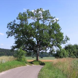 Bild 3 Feldkreuz, hier geht`s links runter zum Osterbach