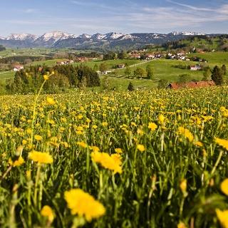 Oberreute_Ortsteil Langenried_Nagelfluhkette