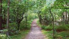 """Wanderwege im Naturschutzgebiet """"Hollesand"""""""