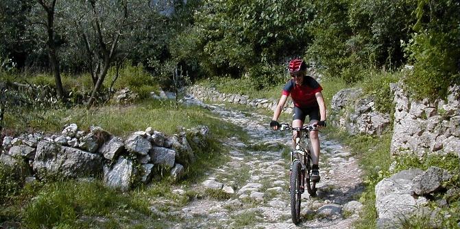 MTB durch schmale Waldwege