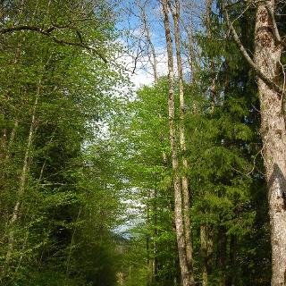 Forstwege im Tal
