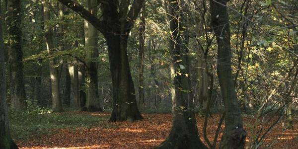 """Der Wald """"Sieben Quellen"""""""