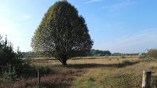 Tor 9 – Groote Heide