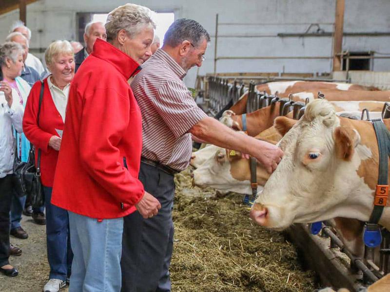 Besuchergruppe auf Du und Du mit Kuh  - @ Autor: Beate Philipp  - © Quelle: Hohenlohe + Schwäbisch Hall Tourismus e.V.