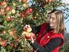 Obst aus Hohenlohe  - @ Autor: Beate Philipp  - © Quelle: Hohenlohe + Schwäbisch Hall Tourismus e.V.