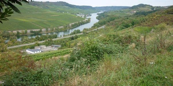 Blick vom Mettfels bei Wincheringen in Richtung Nittel