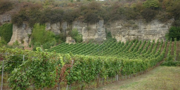 Vineyards and limestone cliffs