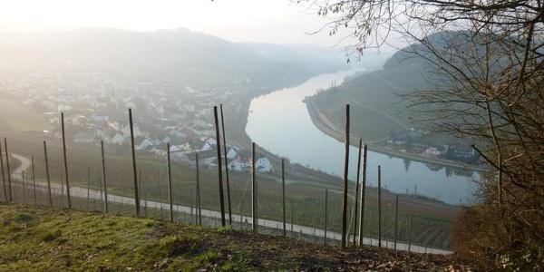 Blick aus den Weinberge auf Nittel und die Mosel