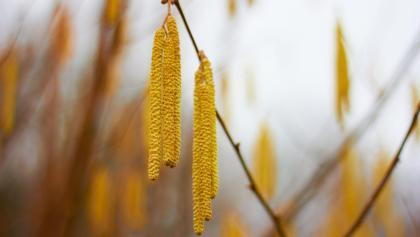 Farbenfrohe Pflanze am Wegesrand.