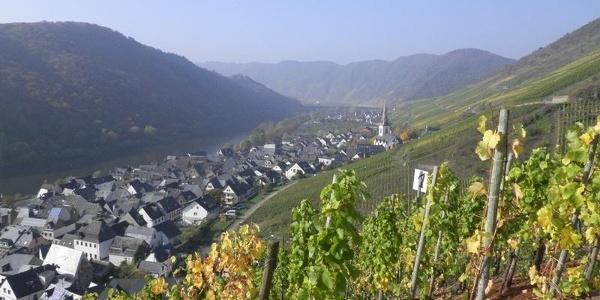 Uitzicht vanaf de wijngaarden op Ediger-Eller