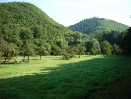 Streuobstwiese im Baybachtal (Foto: Thomas Kalff, Quelle: Mosellandtouristik GmbH)