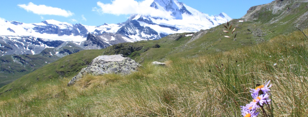 At Höhbalmen, with Matterhorn in view