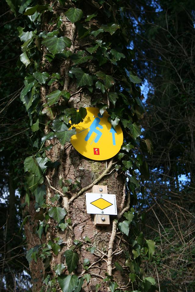 Nordic Walking Tour 1 - Rundtour über Bachwegle und Panoramaweg