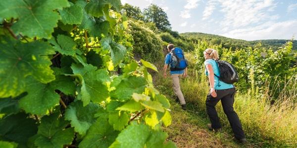 Beklimming naar Burg Thurant