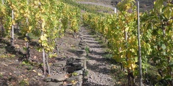 Beklimming door de wijngaarden naar de Bleidenberg