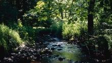 Lebensraumroute - Der Hasselbach im Schießhäuser Tal große Runde