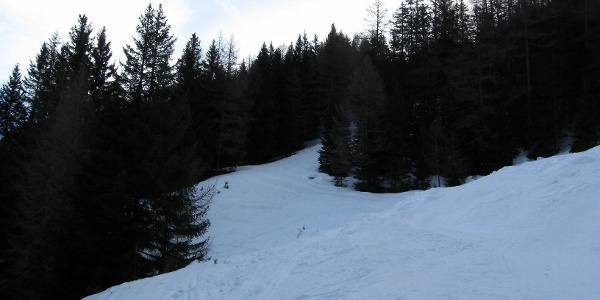 Weiter geht es über diese deutliche Waldschneise aufwärts.