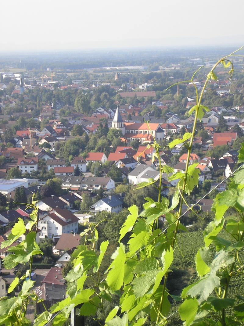 Achern-Oberachern: Obst- und Weinlehrpfad