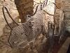 Nachbildung eines Waldnashorns   - © Quelle: Antje Kunz