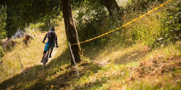 Singel Trail Jamnica