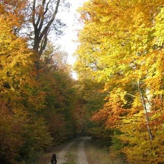 Kupperswiese Niederburg 1