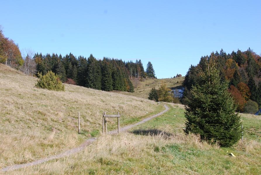 Ibach: Nordic Walking - Panorama-Tour