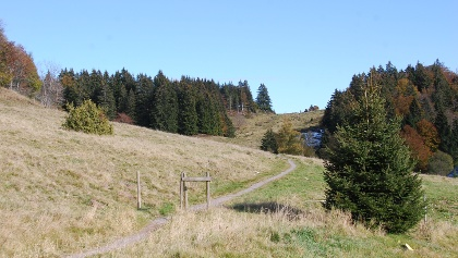 Wanderpfad beim Kohlhütteplatz