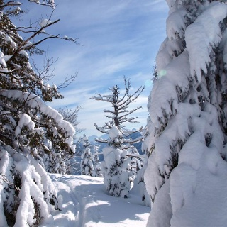 Am tief verschneiten Gipfelplateau 1433 m