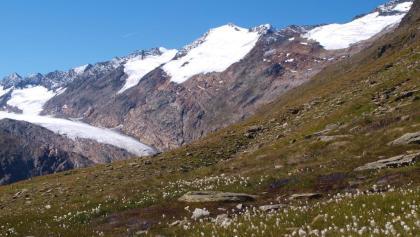 Wollgras bei 2545 m