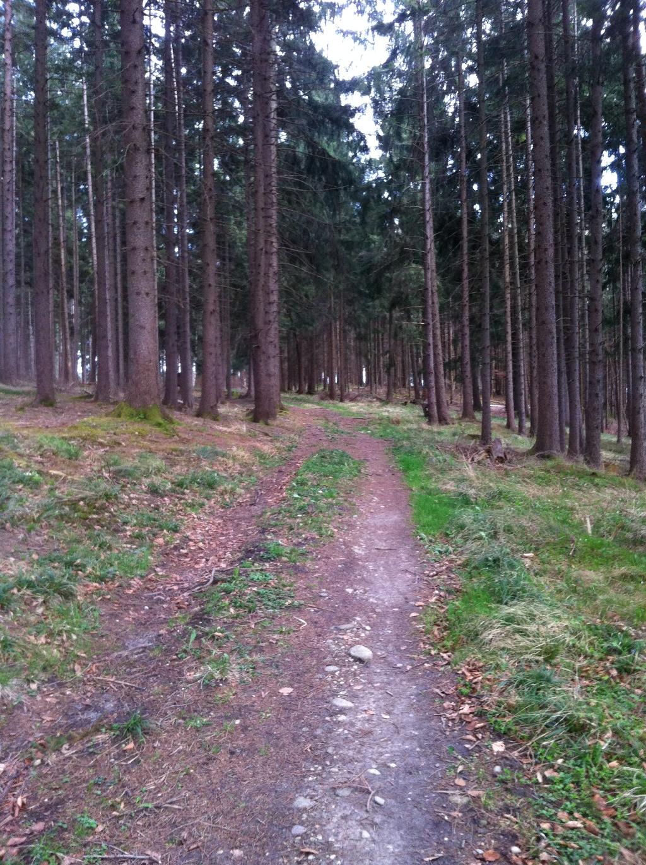 Waldweg um den Hohenberg (Antonie Schmid)