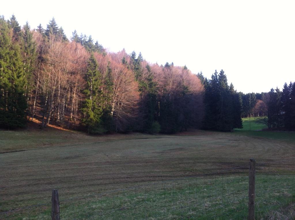 Lichtung im Schallernwald (Antonie Schmid)